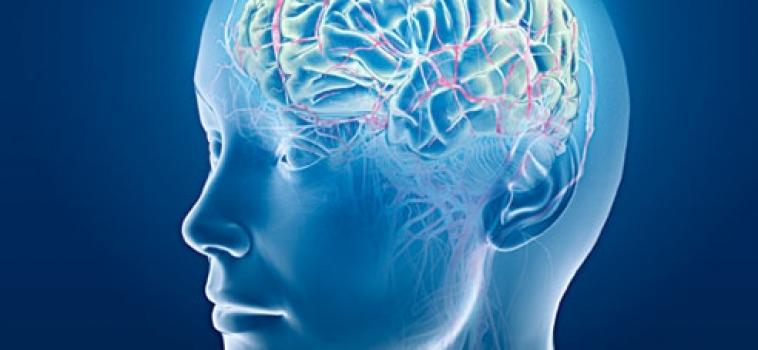 Notícia – 29/06/2011 – Cérebro de Magros e de Obesos Têm Diferenças