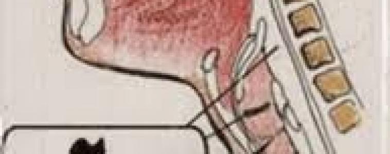 Bolo histérico, uma doença pouco conhecida